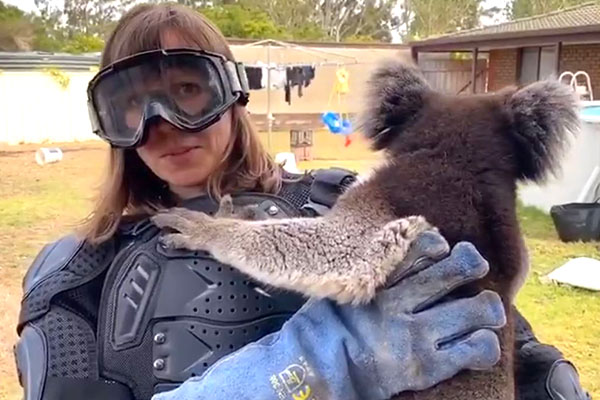 Article image for WATCH | UK reporter pranked with 'vicious' koala