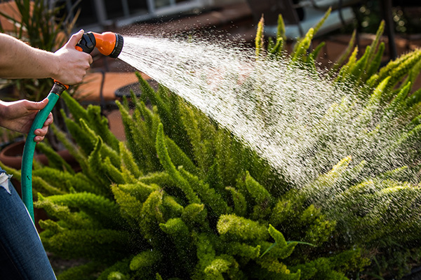 Article image for Thousands of Sydneysiders dobbed in during water restrictions