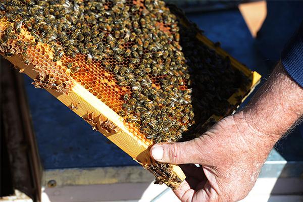 Article image for Australian beekeeping industry under threat following bushfire season