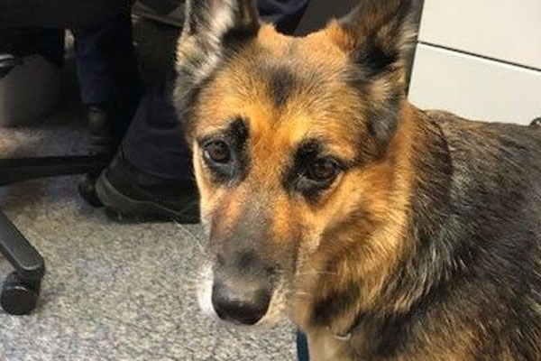 'An amazing miracle': Hero German Shepherd led to owner's rescue