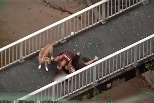 Article image for WATCH | Dog-walker tackles man fleeing police