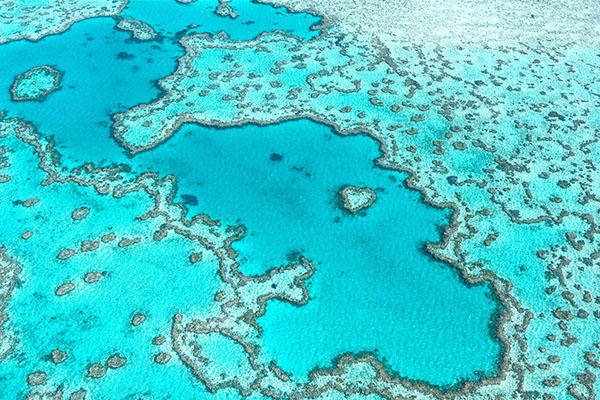 Man dies after shark attack on Great Barrier Reef