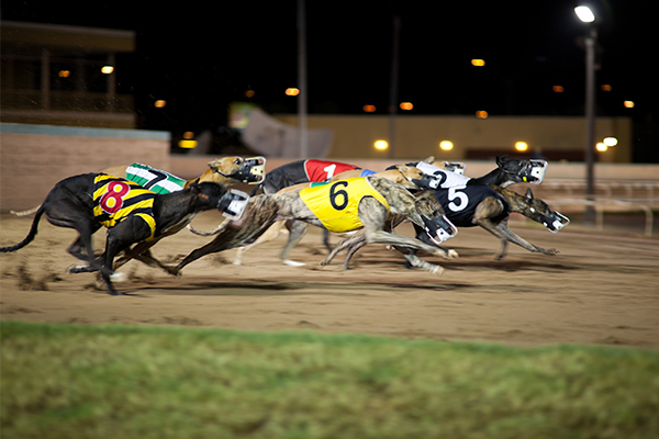 Article image for NSW greyhound industry gets animal welfare overhaul