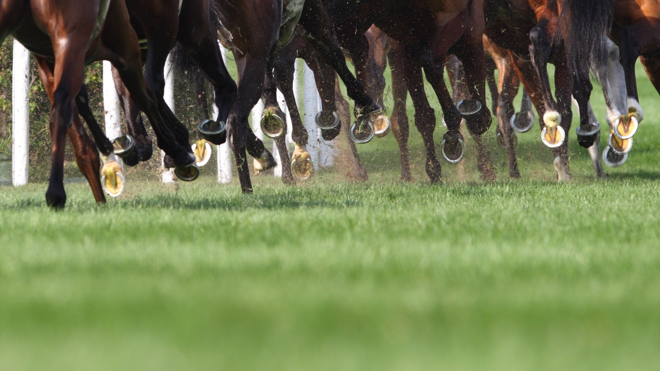 Breaking racing news: Thirteen trainers charged in QLD investigation