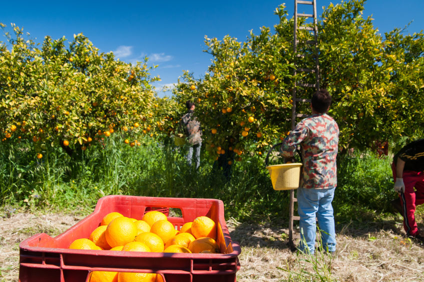 Millions of dollars for Victorian farm worker shortage