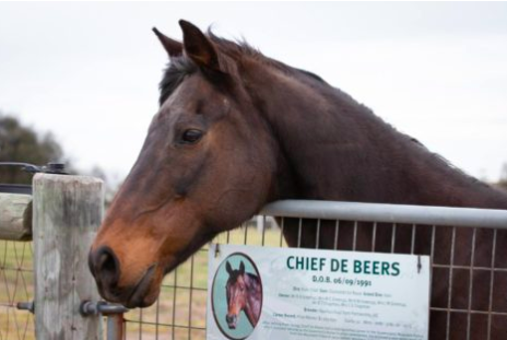 Article image for Vale Chief de Beers: Queensland Police pay tribute to beloved police horse
