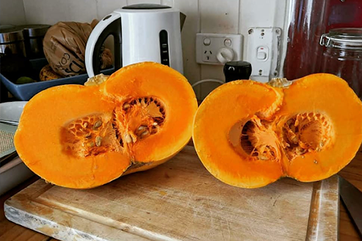 Farmer cultivates new easy to cut pumpkin variety, 11 years in the making