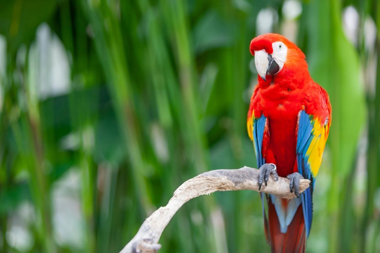 Article image for The 'baffling' bid to overturn Australia's exotic bird ban