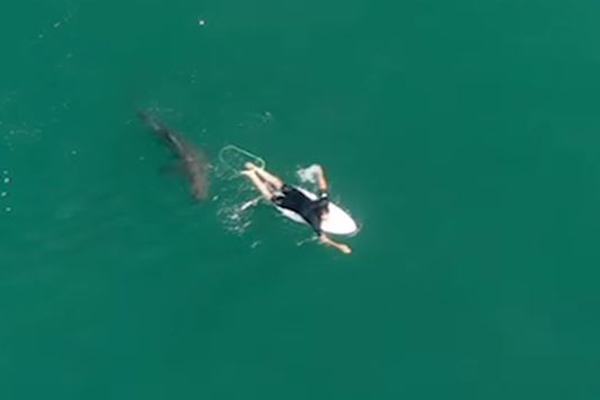 Drone alerts oblivious surfer to circling shark