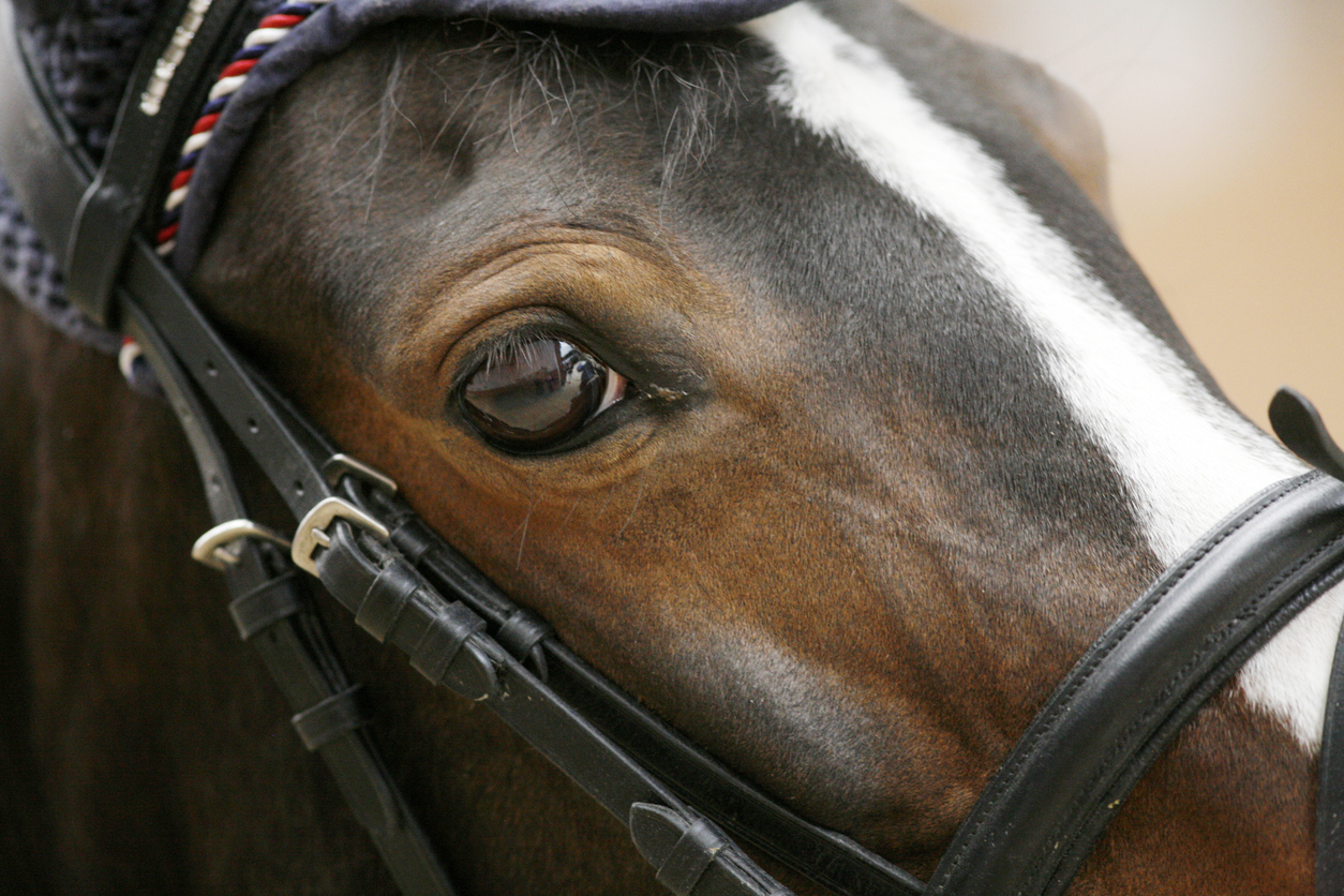 Article image for Melbourne Cup: Finche owner holds out hope for his 'awkward' gelding
