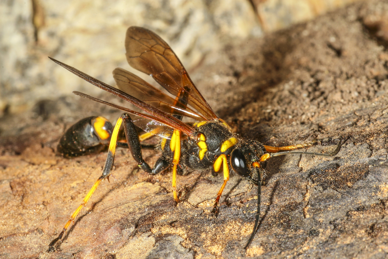 Could wasps bring down planes at Brisbane Airport?