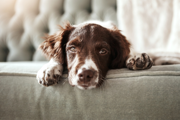 The holiday habits that could kill your pet