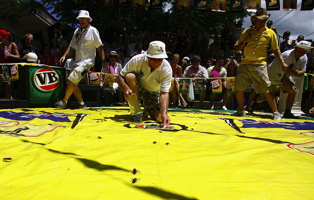 Article image for Annual roach races return to Story Bridge