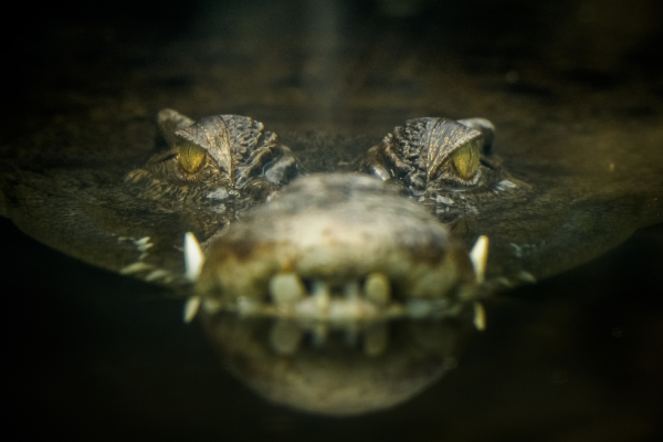 Article image for Man's incredibly close call after fending off crocodile in Cairns