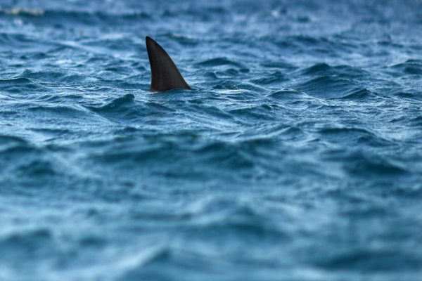 Article image for 'Move with the science': The way of the future to monitor sharks