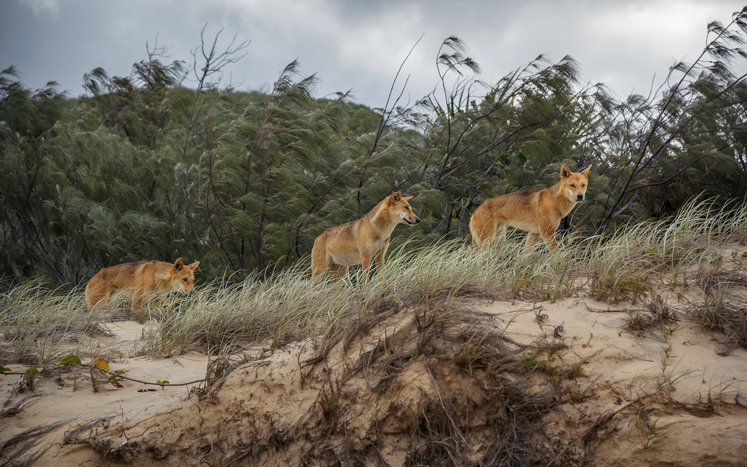 Article image for 'It is a wild place': Fraser Island Mayor delivers firm warning to visitors