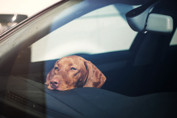 More than 180 calls to the RSPCA this year for dogs left in hot cars