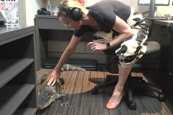 WATCH   Deborah Knight meets Rosie, the caffeine-addicted alligator