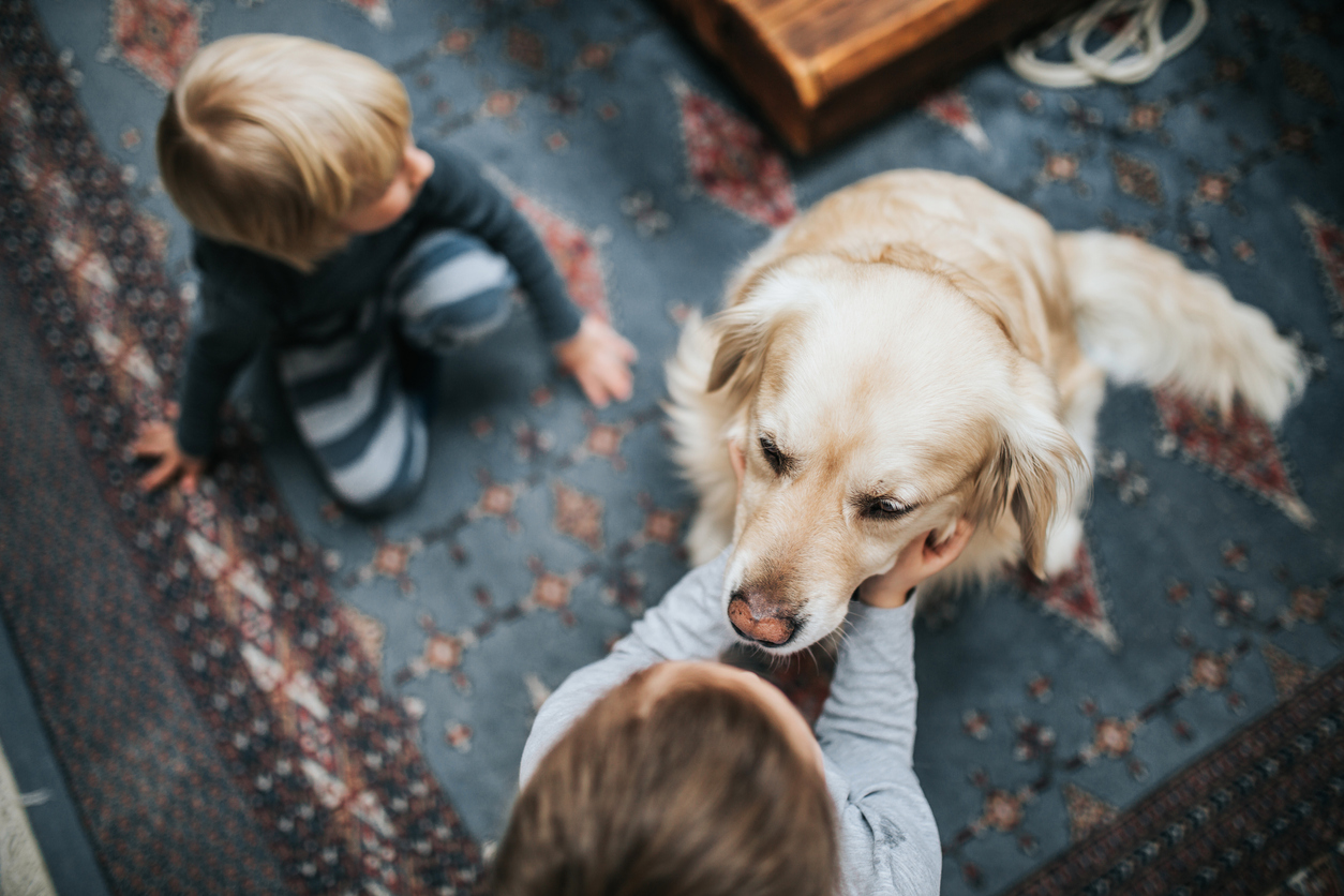 Article image for Aussie dog owners spending big on their furry friends