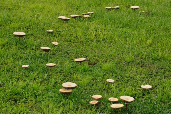 Signs your pet might have eaten a poisonous mushroom