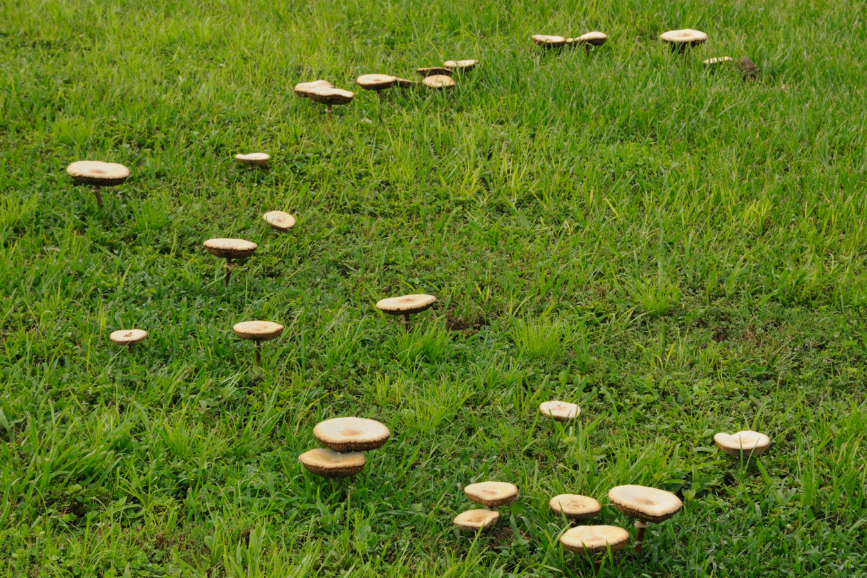 Seeing more mushrooms in the garden? Here's why!