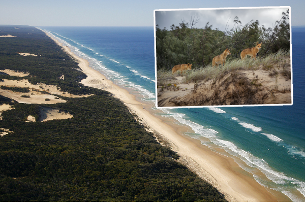 Dire warning after another attack on a young child at Fraser Island