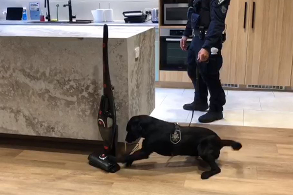 The tech dogs helping sniff out dangerous criminals