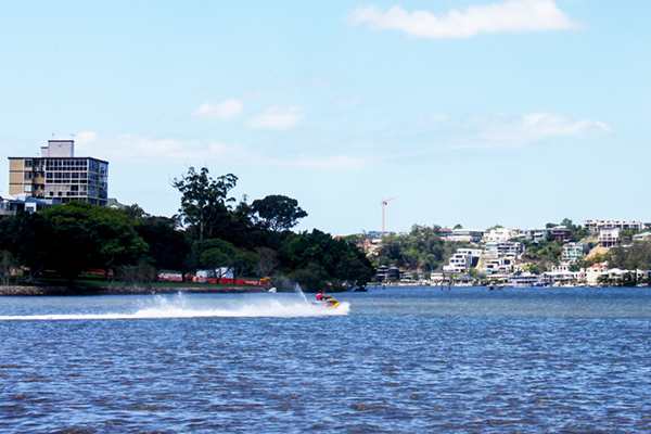 Officials on the chase for Brisbane's 'menacing' river hoons