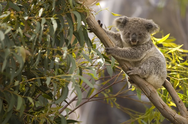 Article image for 'I'm listing new species all the time': Government launches plan to protect biodiversity