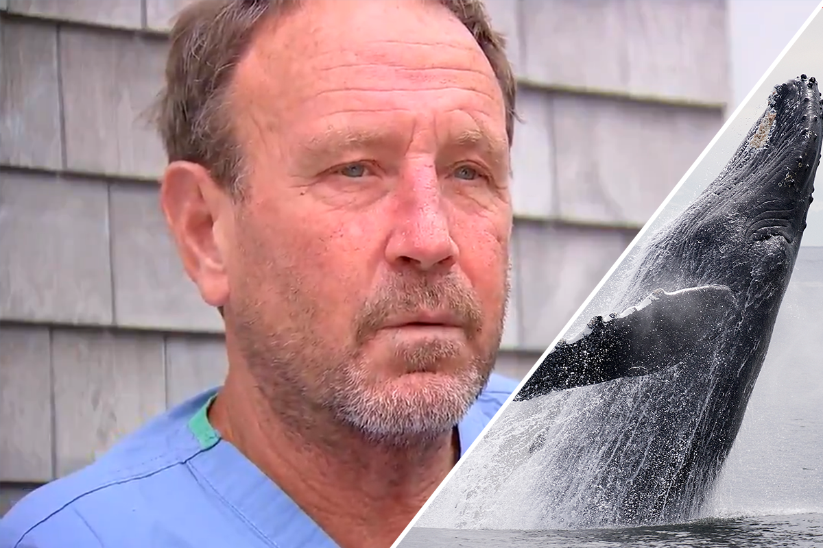 Article image for US lobsterman survives being swallowed by humpback whale