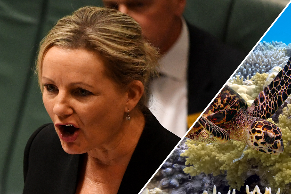 Australia blindsided by UN push to downgrade Great Barrier Reef