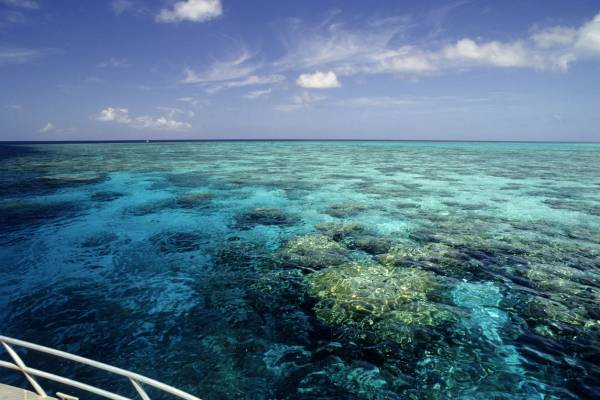 Ambassadors given a close-up tour of the Great Barrier Reef ahead of critical vote