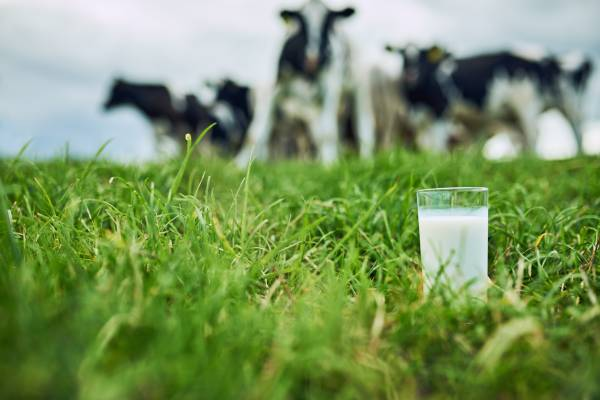Calls for an advertising campaign for the dairy industry amid 'emerging market'