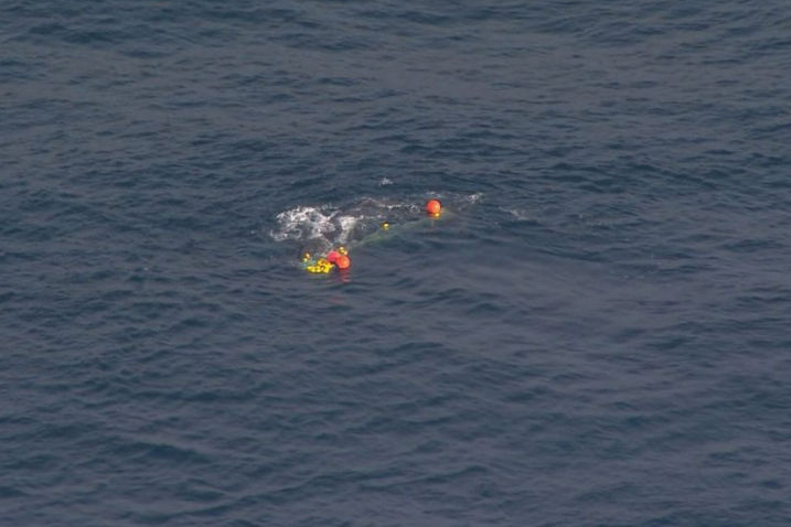 Article image for Rescue mission to free whale underway at Snapper Rocks