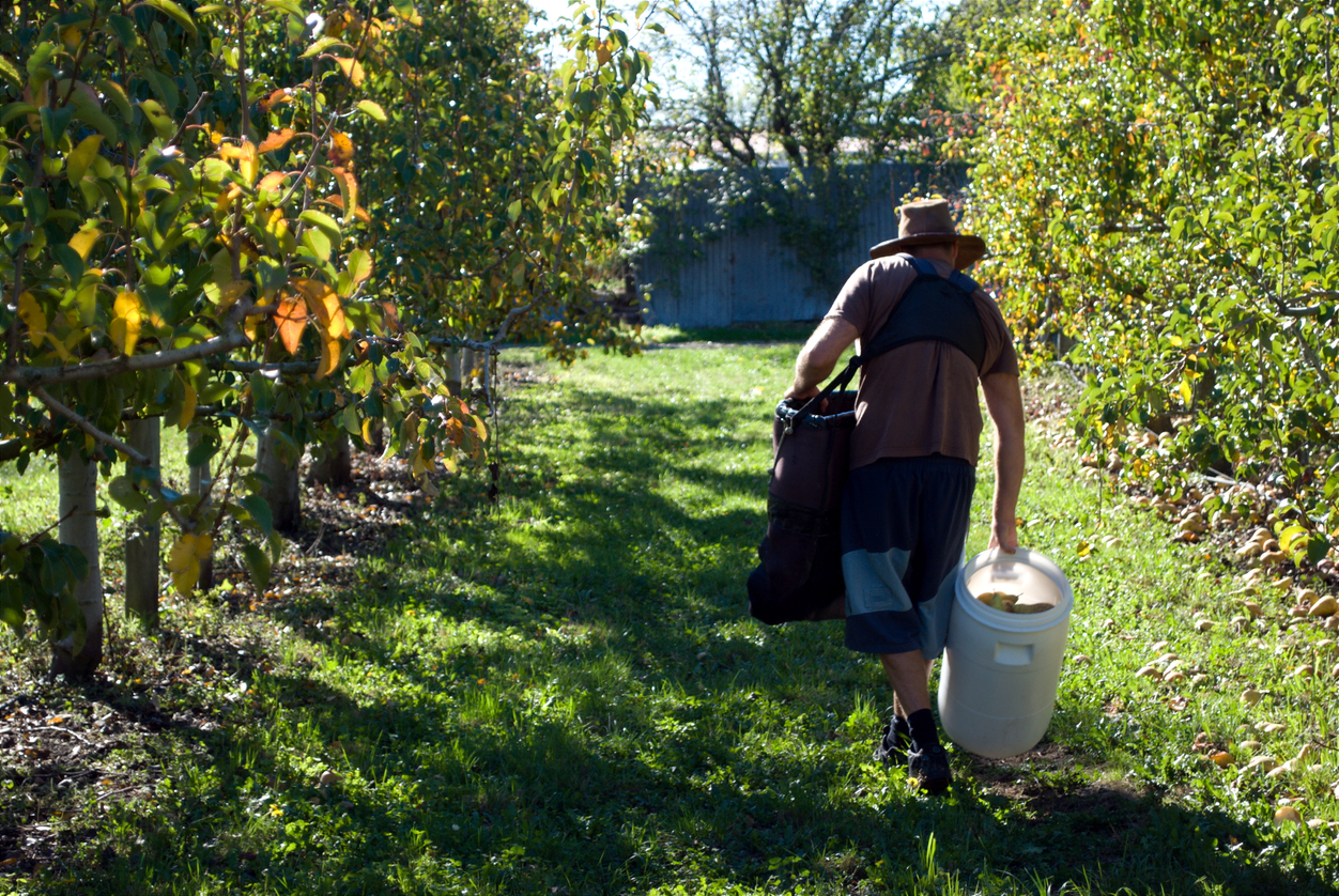 Article image for How Queensland growers have adapted after critical worker shortage