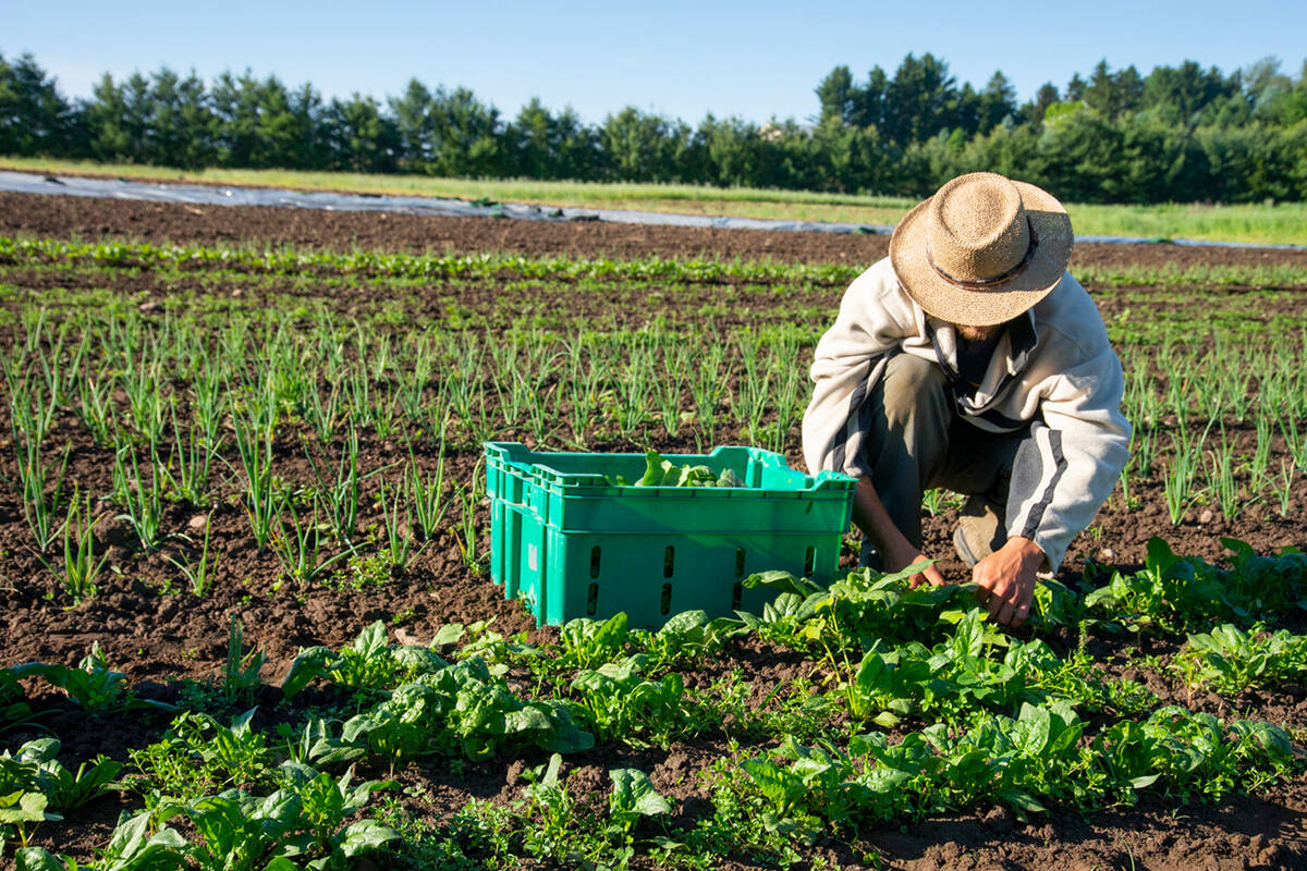 Article image for Why farms are facing a worker shortage despite domestic recruits