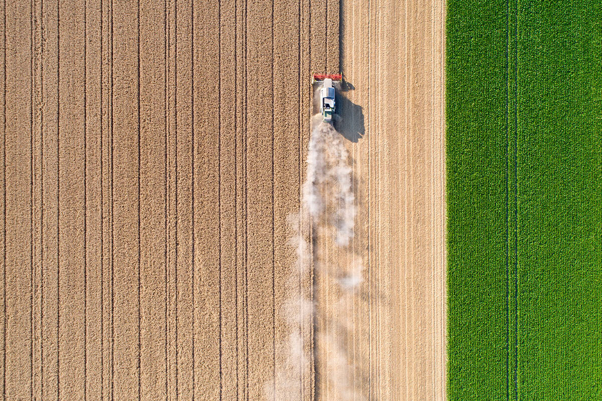 Article image for Restrictions uncertainty doing farmers' 'heads in' as harvest nears