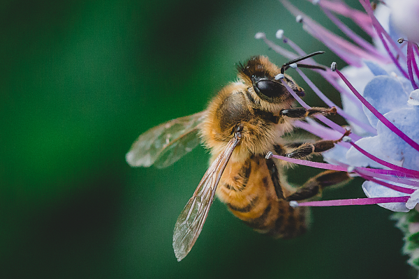 Article image for Good news for Queensland's honey bees